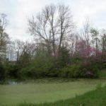 The Good, The Bad, and The Ugly: A Tale of Two Ponds