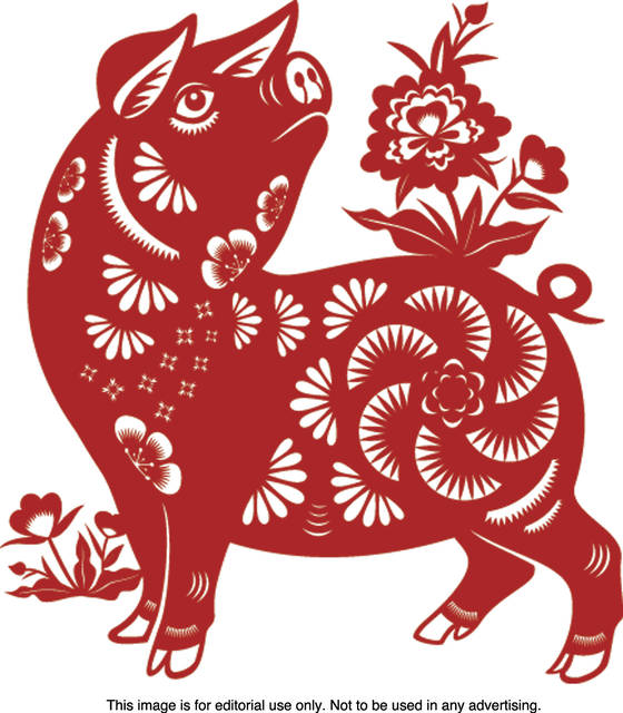 Chinese New Year 2019 Animal Celebrate Chinese New Year: 2019 is the Year of the Pig   Register